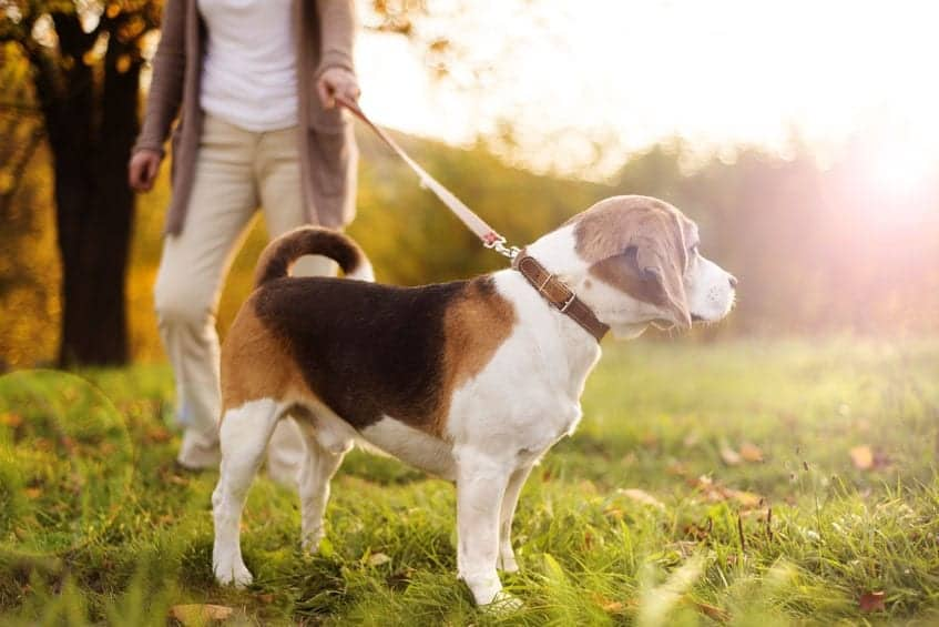 IBS in dogs | Dr. Marty Pets