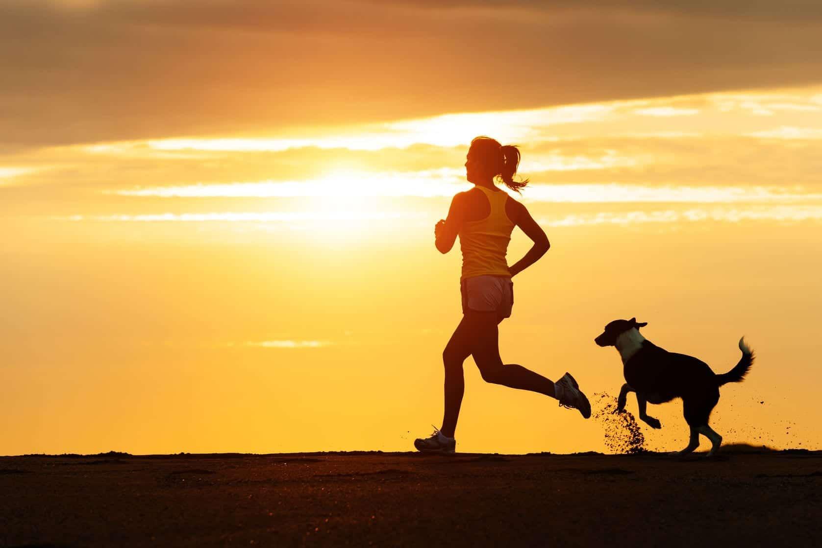 Rots de chien | Dr Marty Animaux