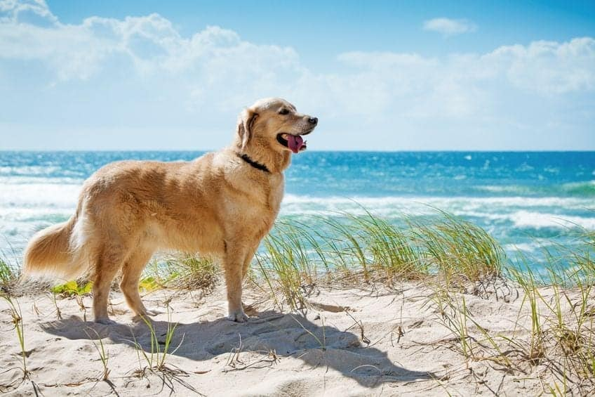 6 Tips for Summertime Dog Safety (paws included!)