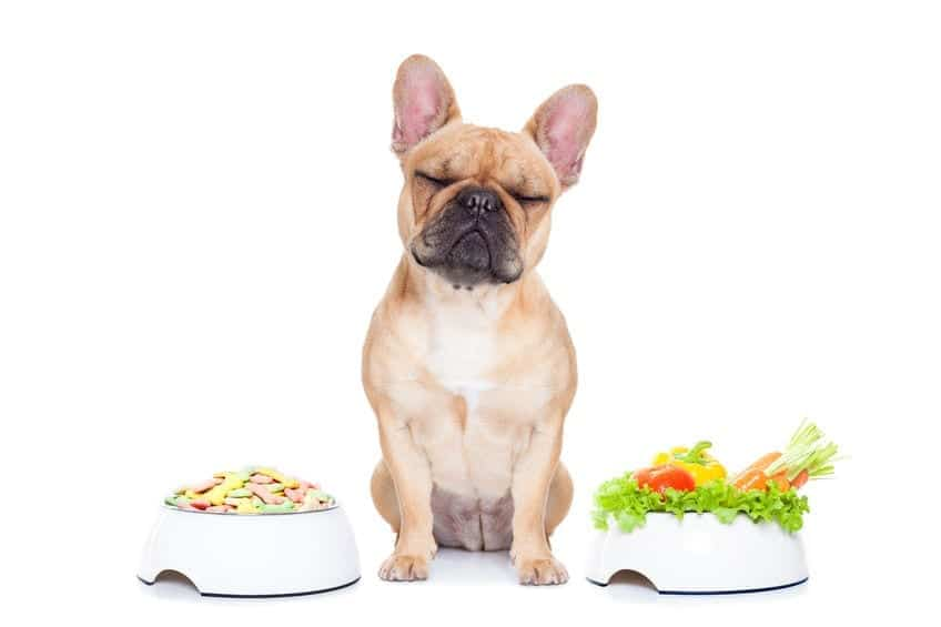 Have a Fat Dog? (what causes obesity in dogs and how to fix it)