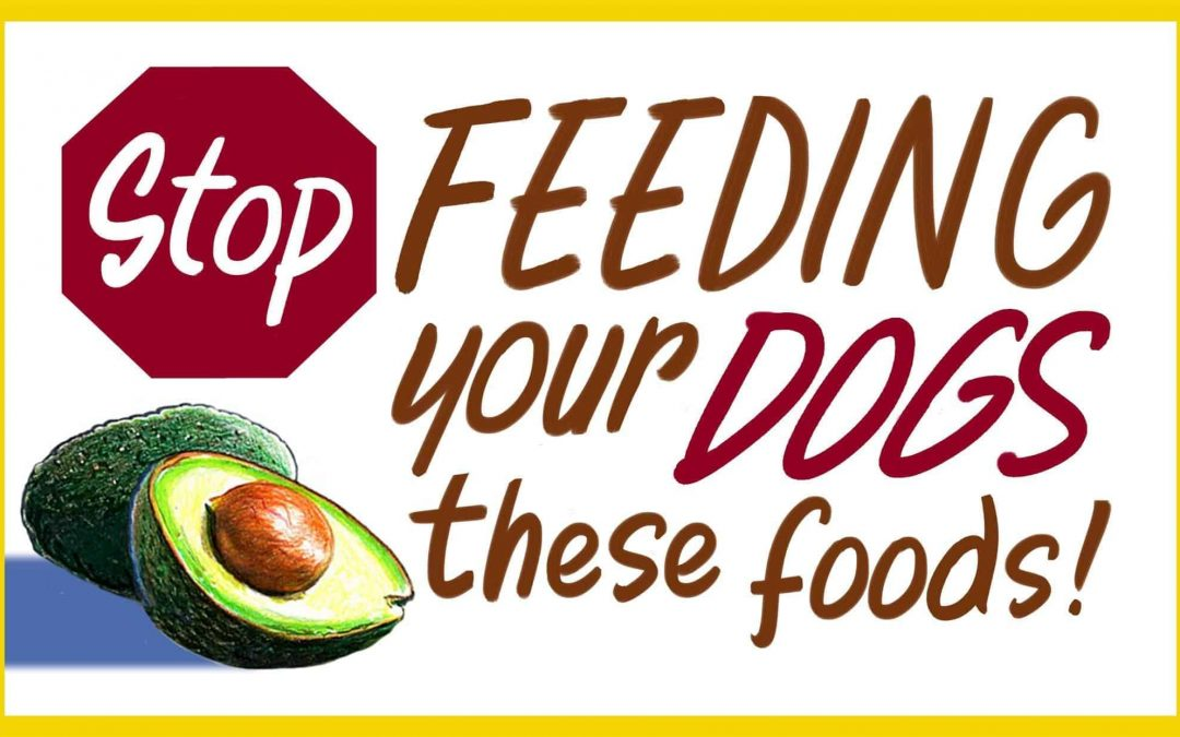 15 Harmful Foods For Dogs To Avoid (and other toxic no-no's)