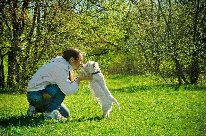Ginger for Dogs? 4 Ways it Can Improve Your Dog's Health