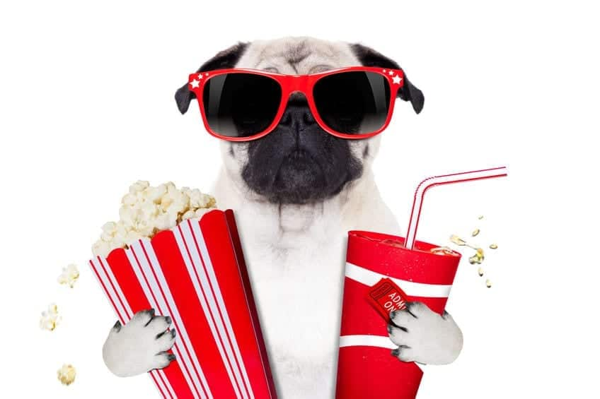 Human Food for Dogs: Can Dogs Eat Popcorn?