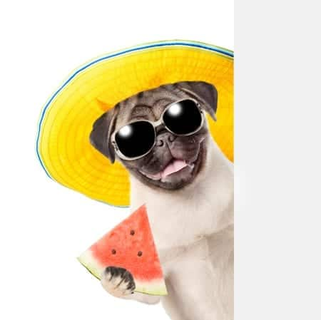 can dogs eat watermelon | Dr. Marty Pets