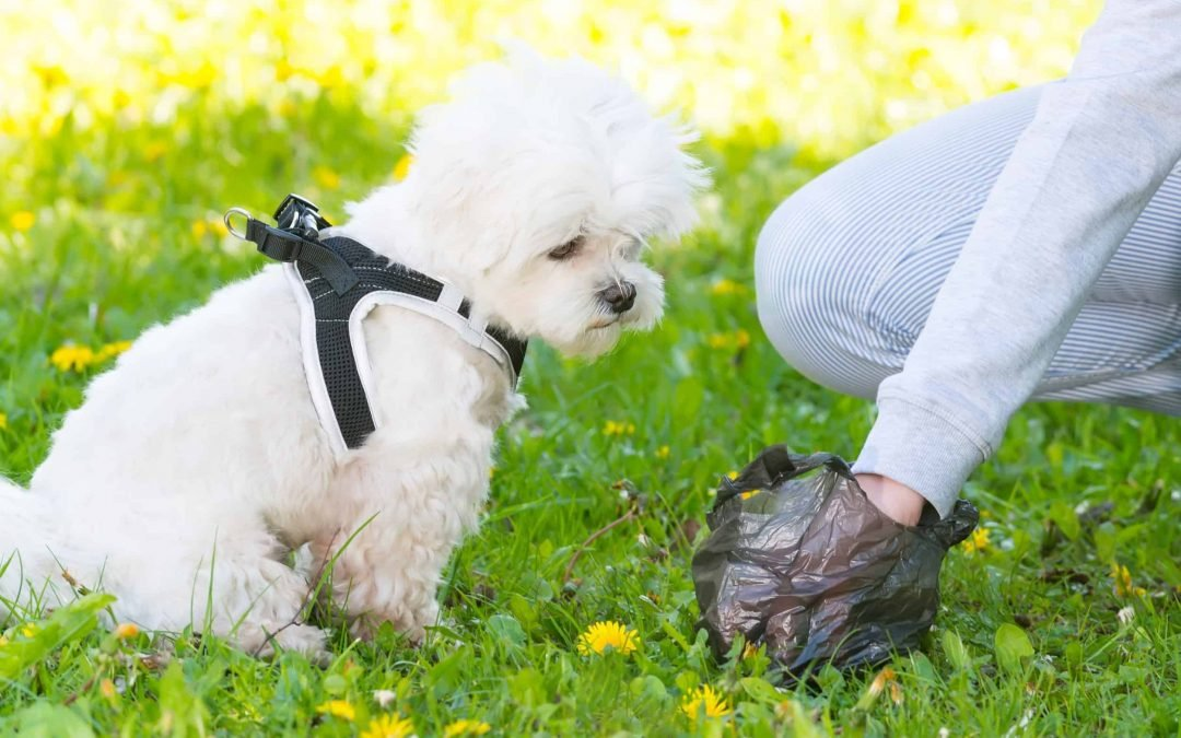 Mucus In Your Dog's Stool: What's Normal, What's Not?