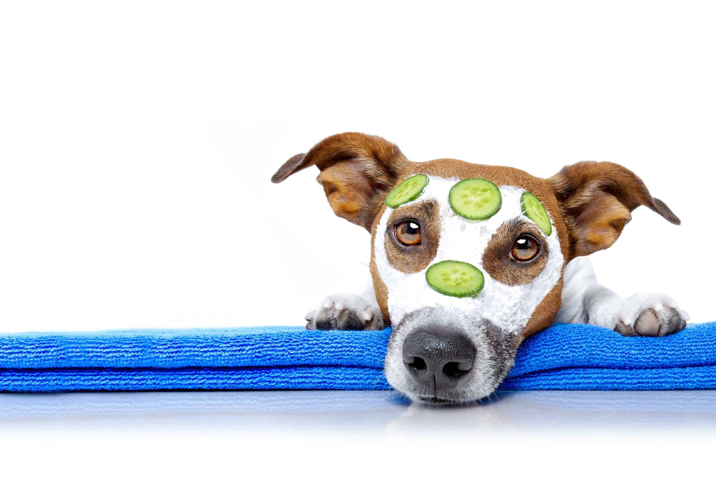 Human Food for Dogs: Can Dogs Eat Cucumbers?