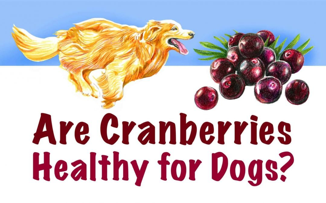 Human Food For Dogs: Can Dogs Eat Cranberries?