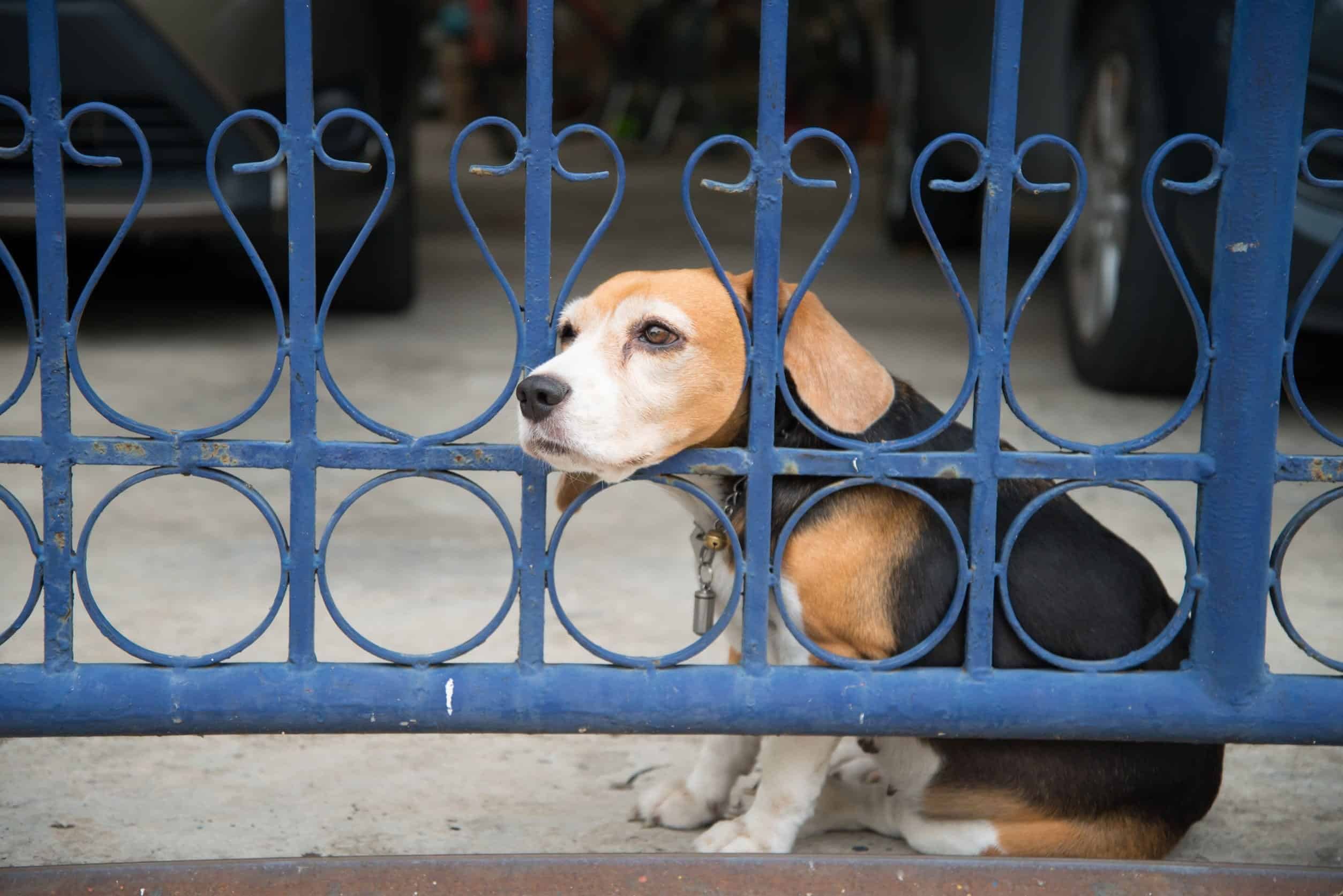 Separation Anxiety In Dogs | Dr. Marty