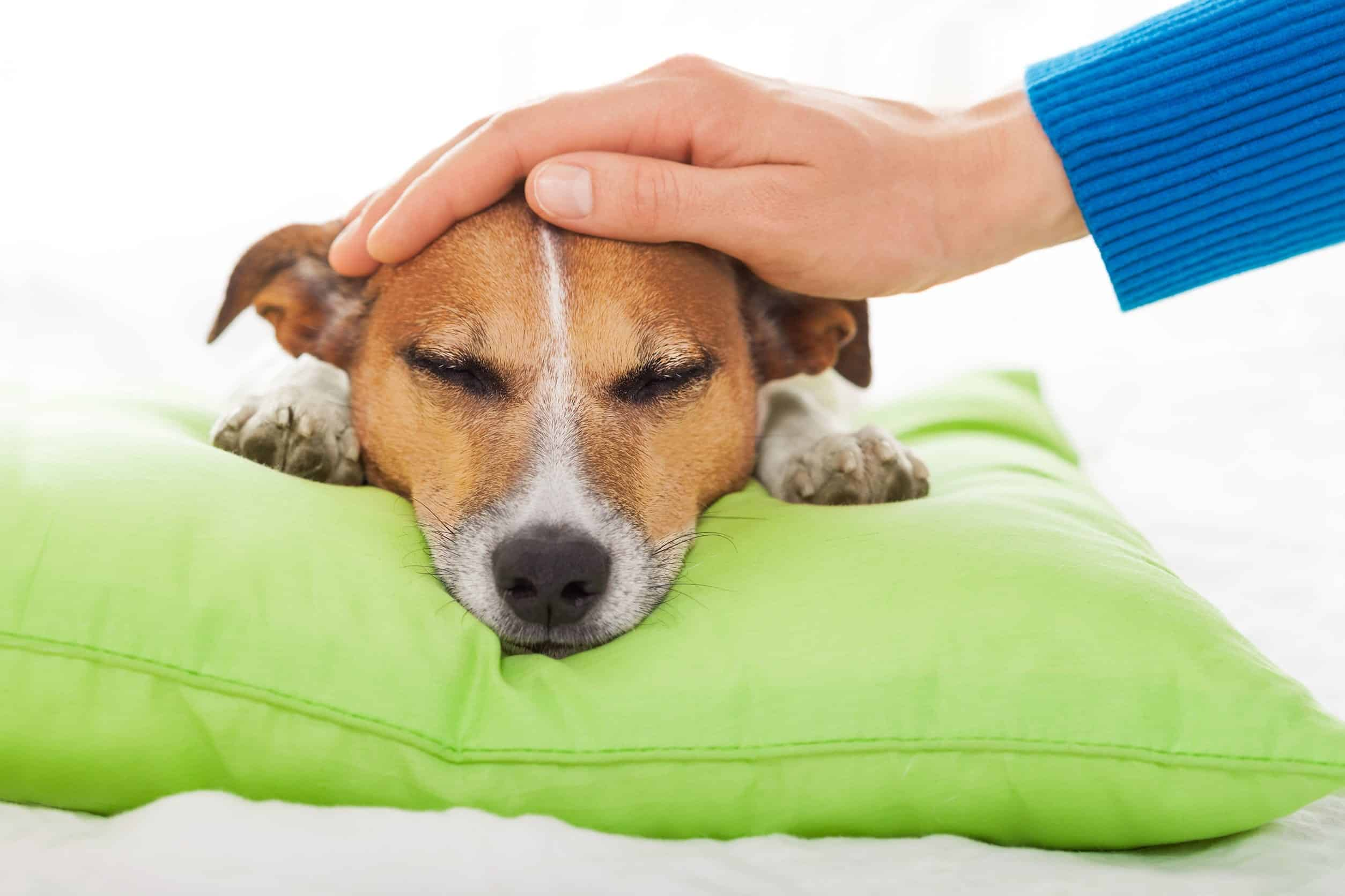 Is Giving Your Dog Antibiotics Ok? – What You Need To Know