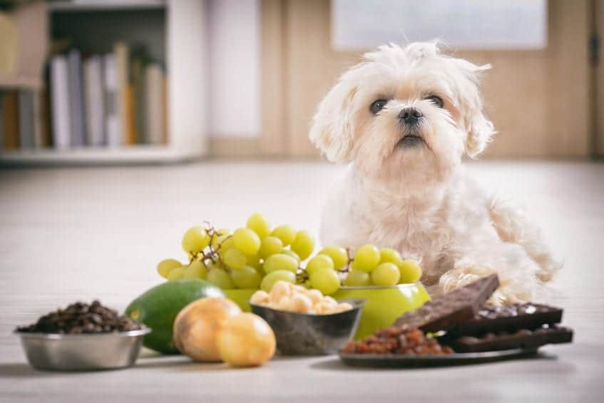 7 Surprisingly Bad Foods for Dogs (They are Toxic!)