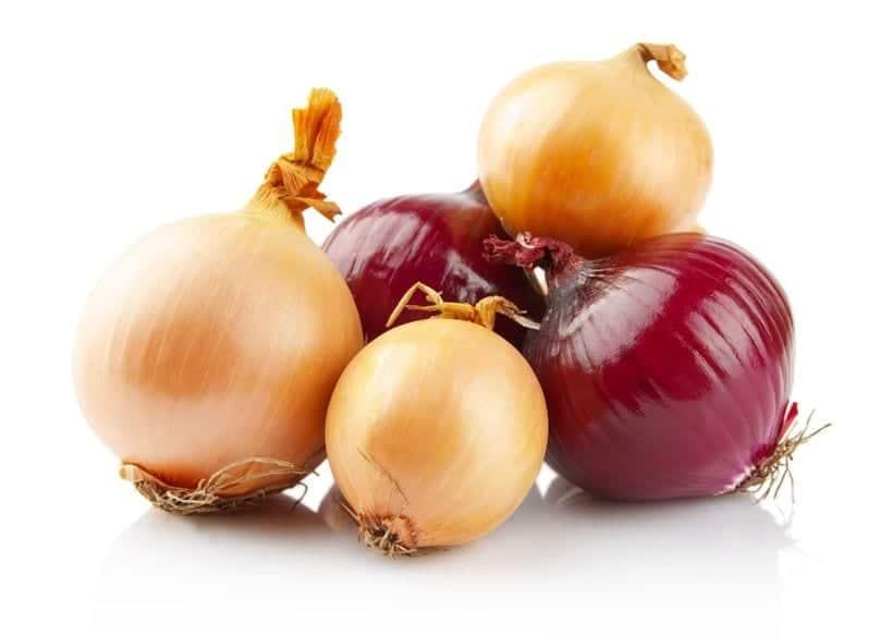 onions toxic dog food