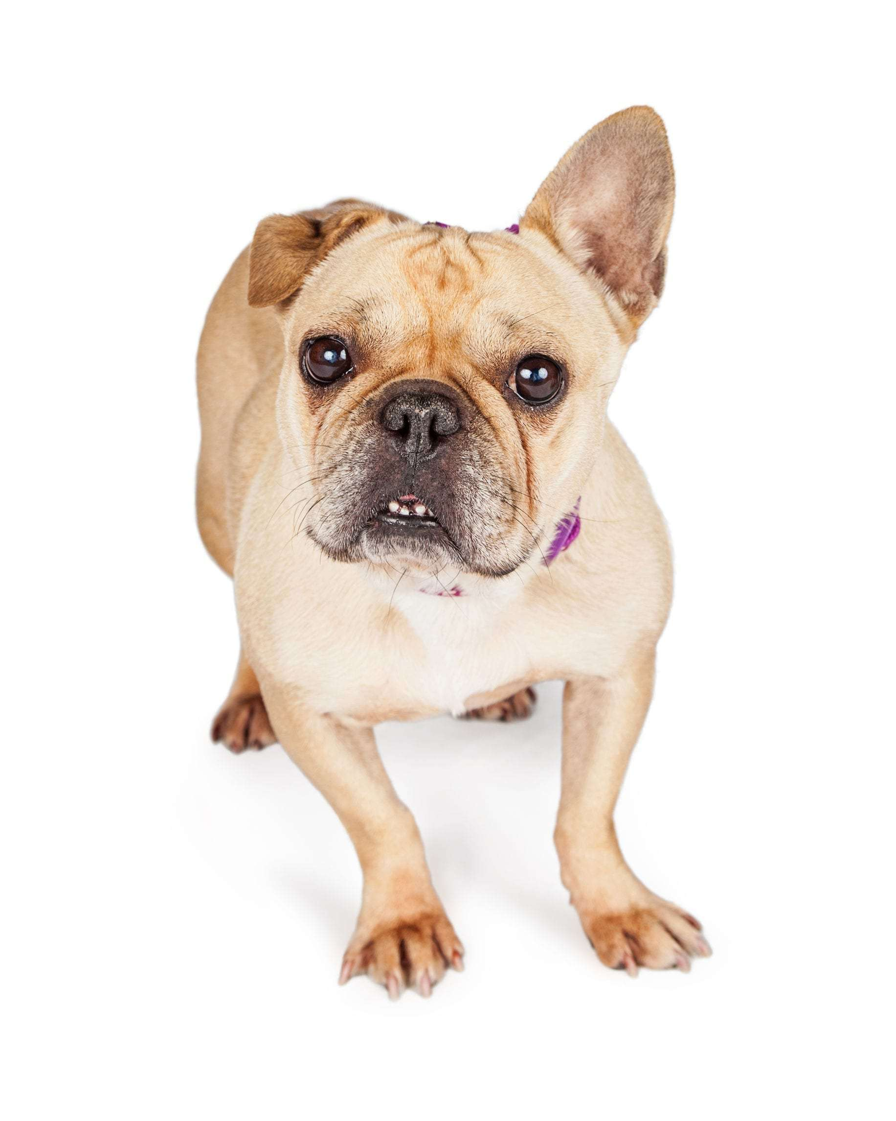 ear infections in dogs | Dr. Marty