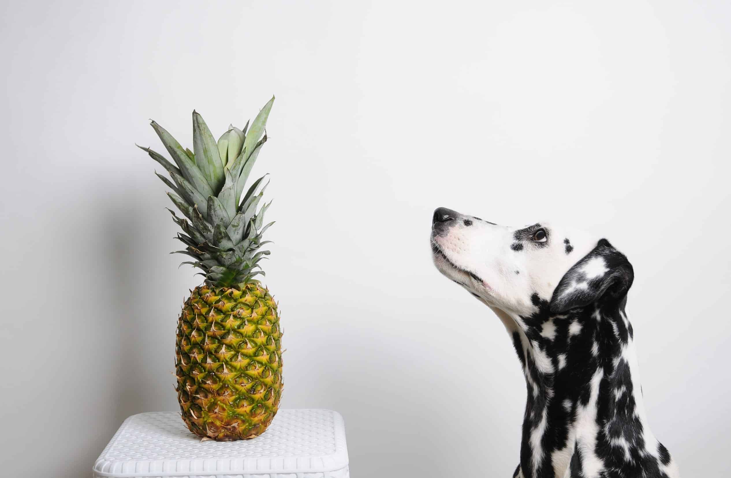 Human Food For Dogs: Can Dogs Eat Pineapple?