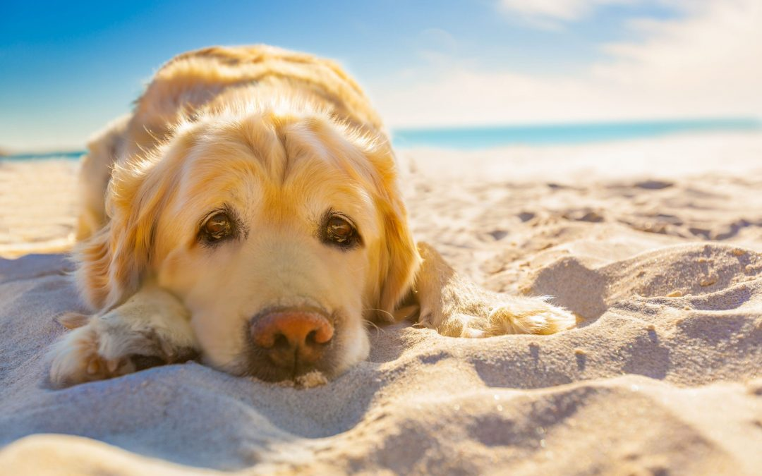 How to Keep Your Dog Safe in Hot Weather