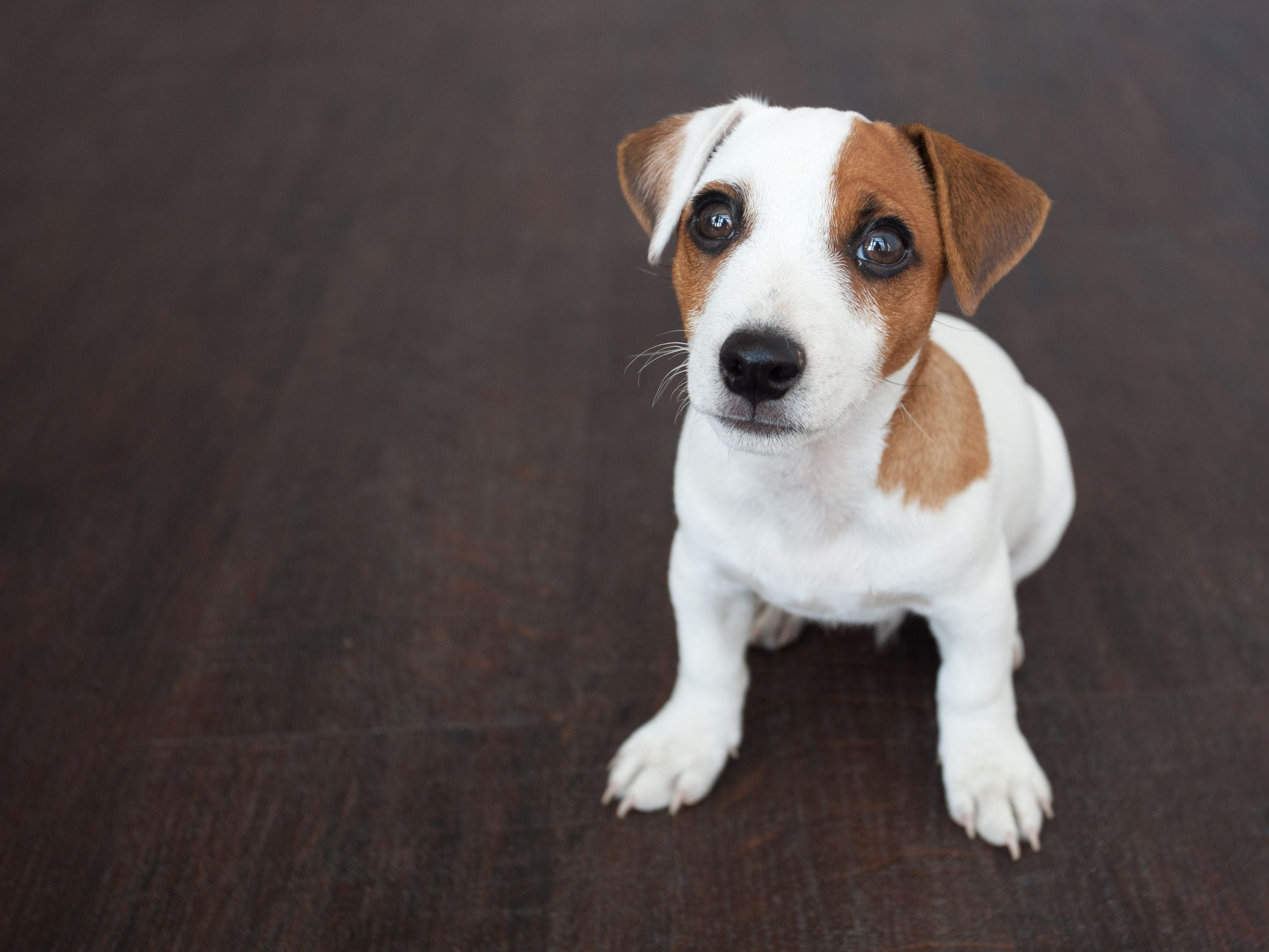 Does My Dog Have Worms? Here Are 8 Signs