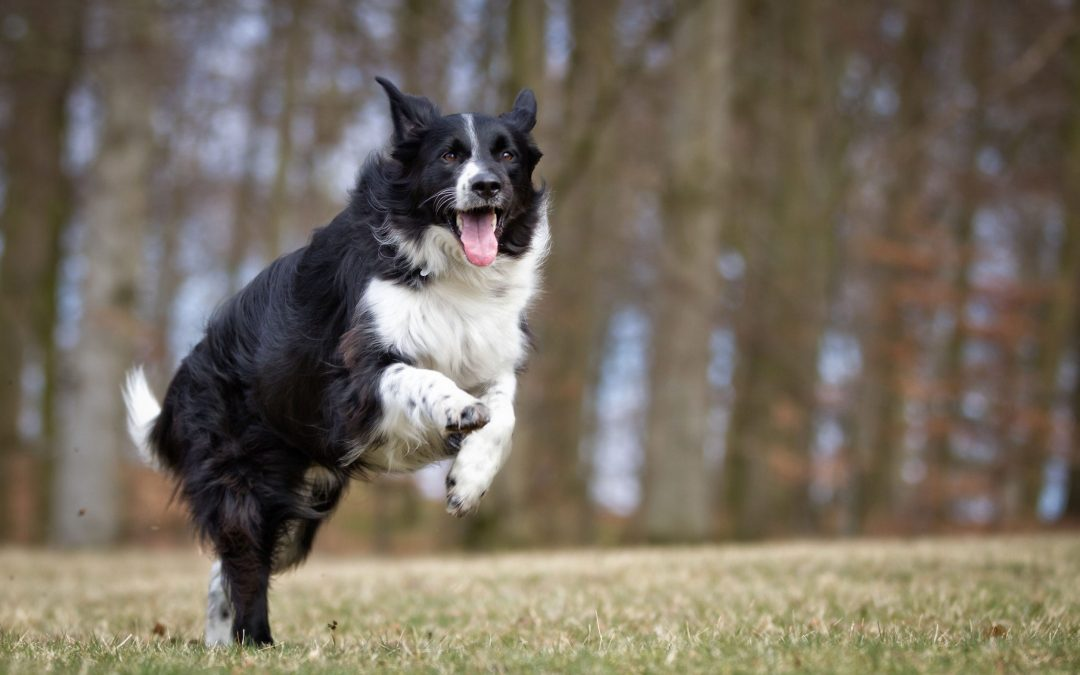 The 6 Smartest Dog Breeds