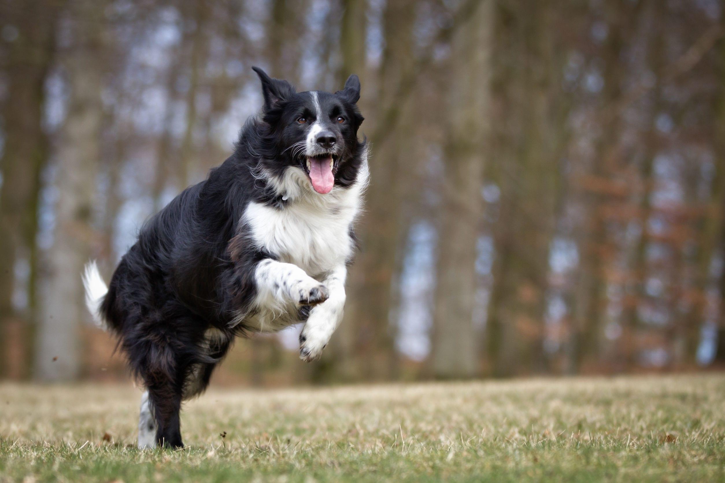 The 6 Smartest Dog Breeds