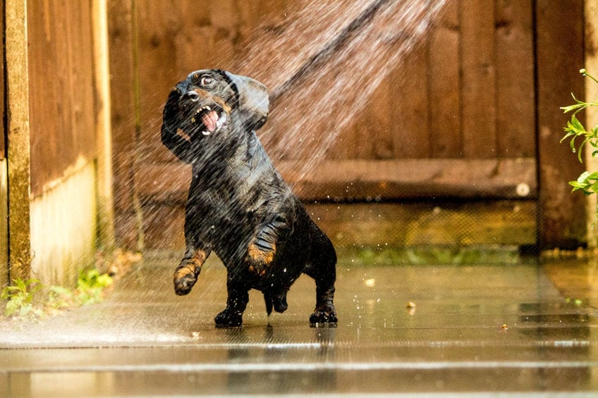 Dog Safety in Hot Weather | Dr Marty