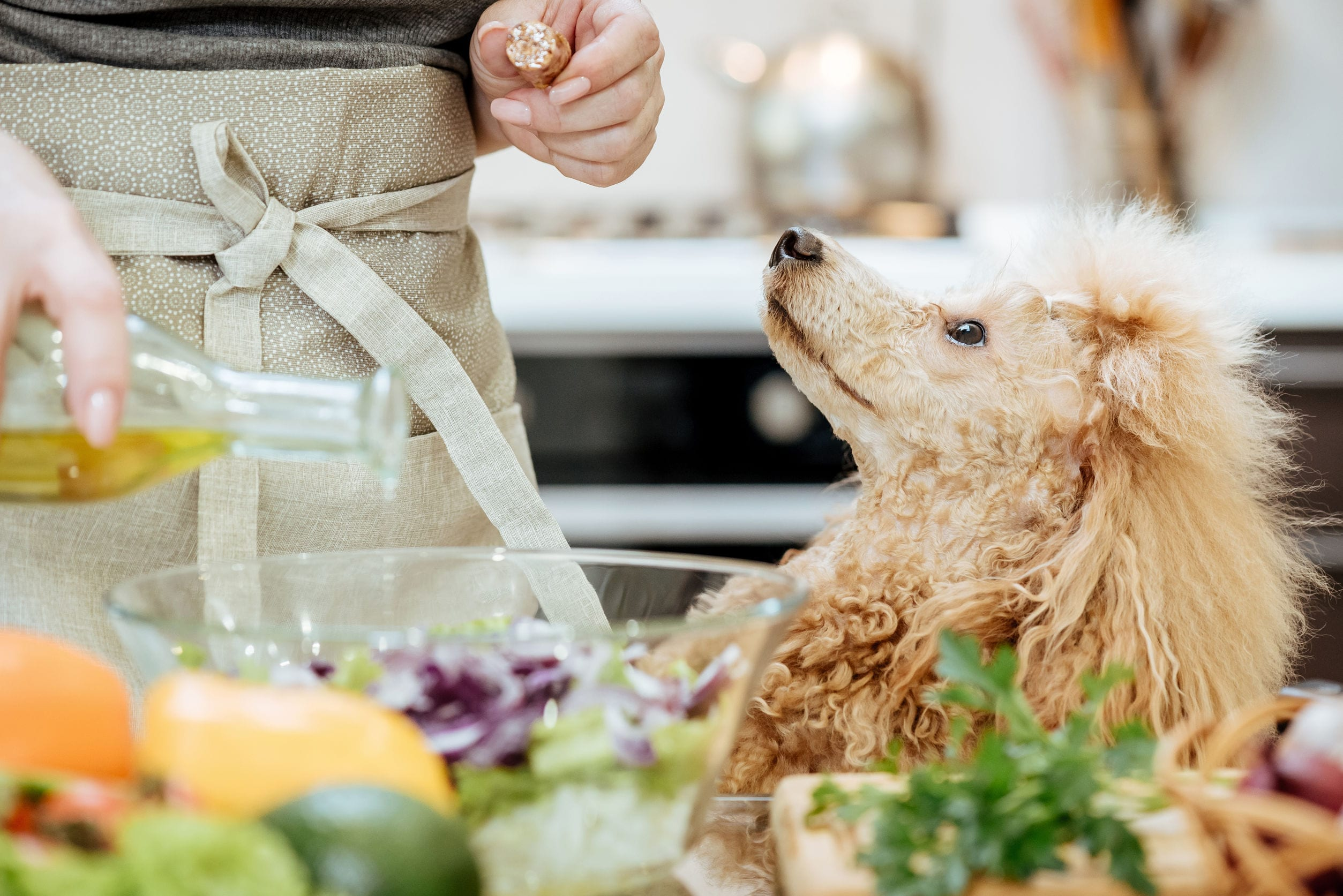 Olive Oil for Dogs – Can It Benefit Your Pup?