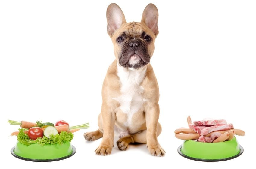 Dog Is Vomiting Bile | Dr Marty