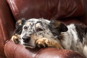Dog Is Vomiting Bile | Dr Marty