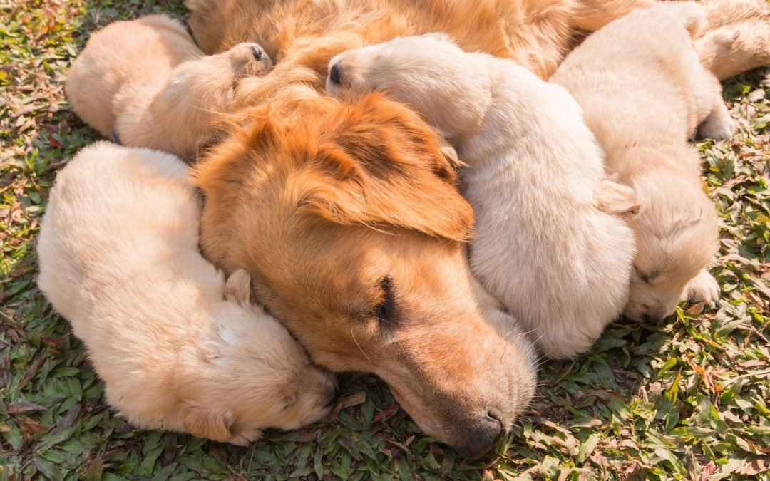 The 4 Stages Of Dog Pregnancy (and how you can help your pup)