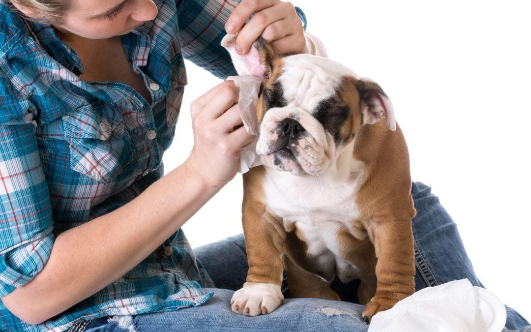 A DIY Dog Ear Cleaner Using Simple Ingredients