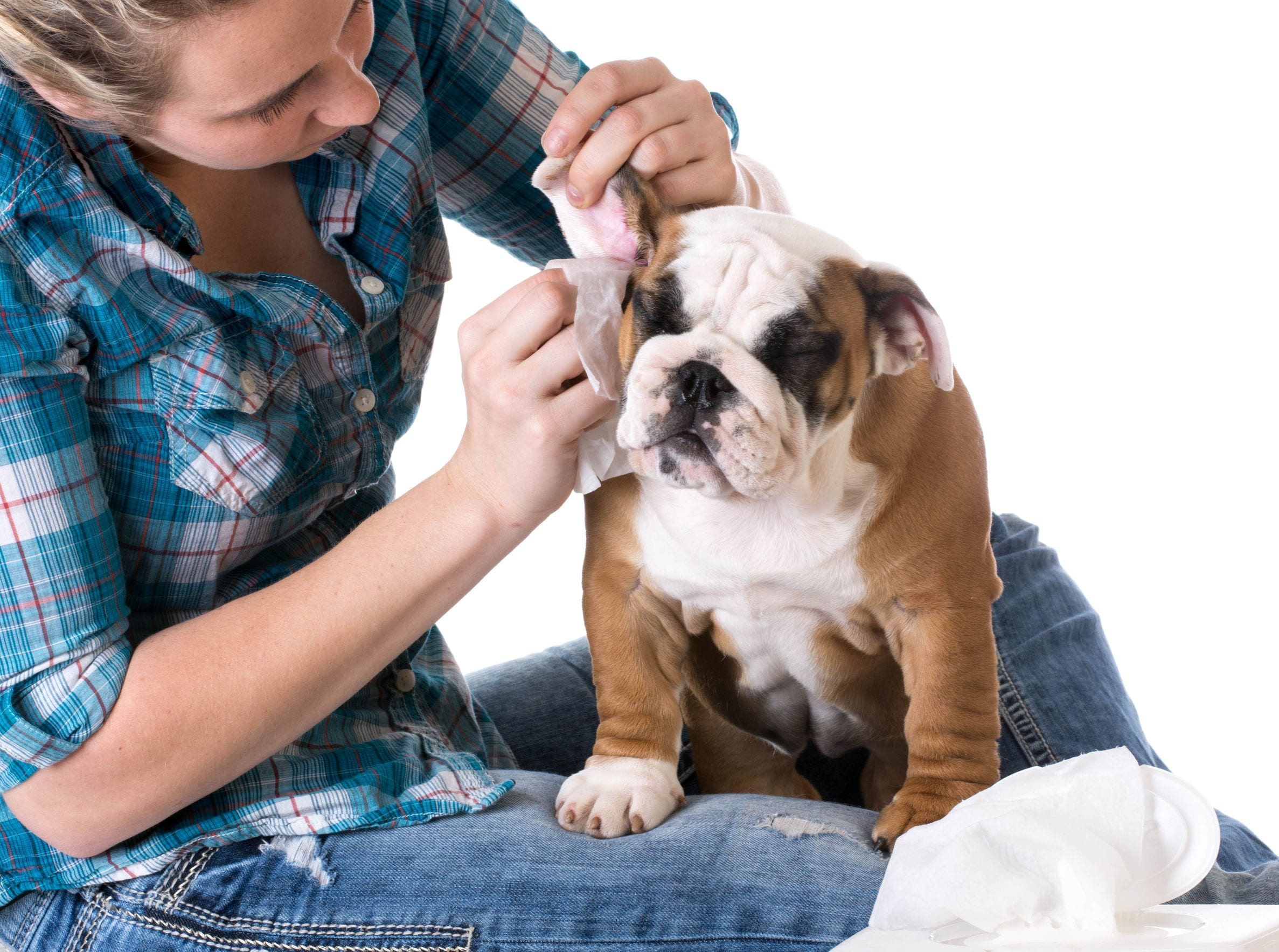 How To Make Your Own Dog Ear Cleaner Using Simple Ingredients