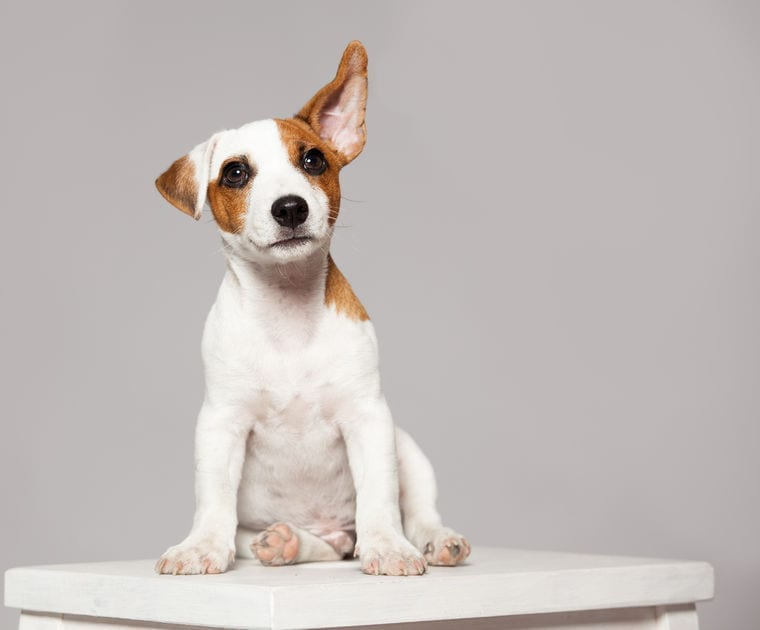 Dog Ear Cleaner   Dr Marty