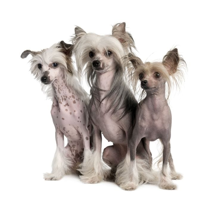 Dog Breeds That Don't Shed | Dr Marty