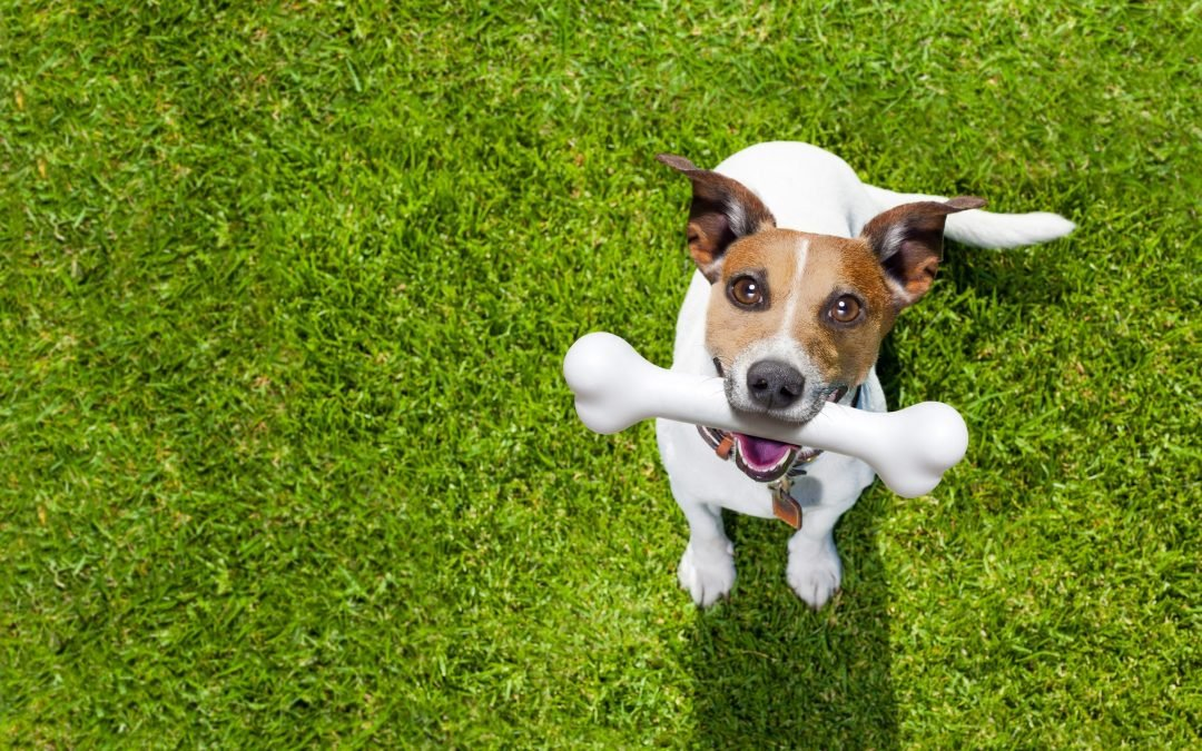 Why is Calcium So Important for Dogs?