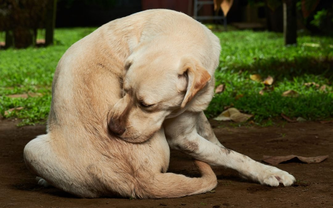 What Is a Dog Hot Spot? (And How To Care For Them)