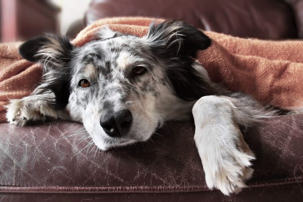 My Dog Has an Upset Stomach and is Shaking – What Does That Mean?