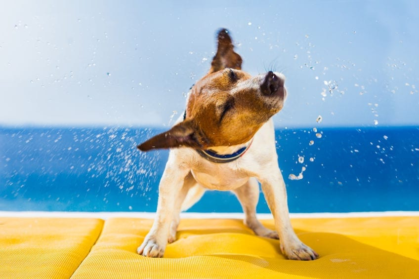 7 Reasons Why Your Dog Might Be Shaking