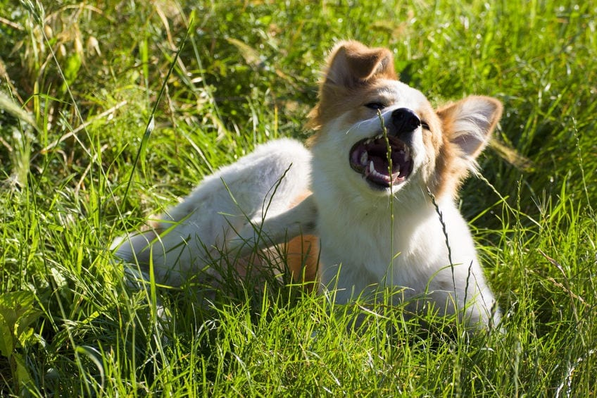 Why Does My Dog Itch?