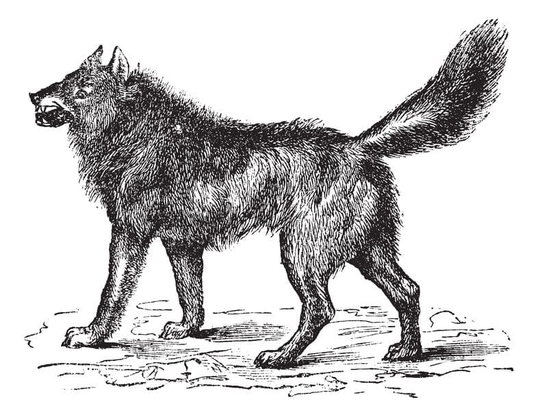 History of Dogs | Dr Marty