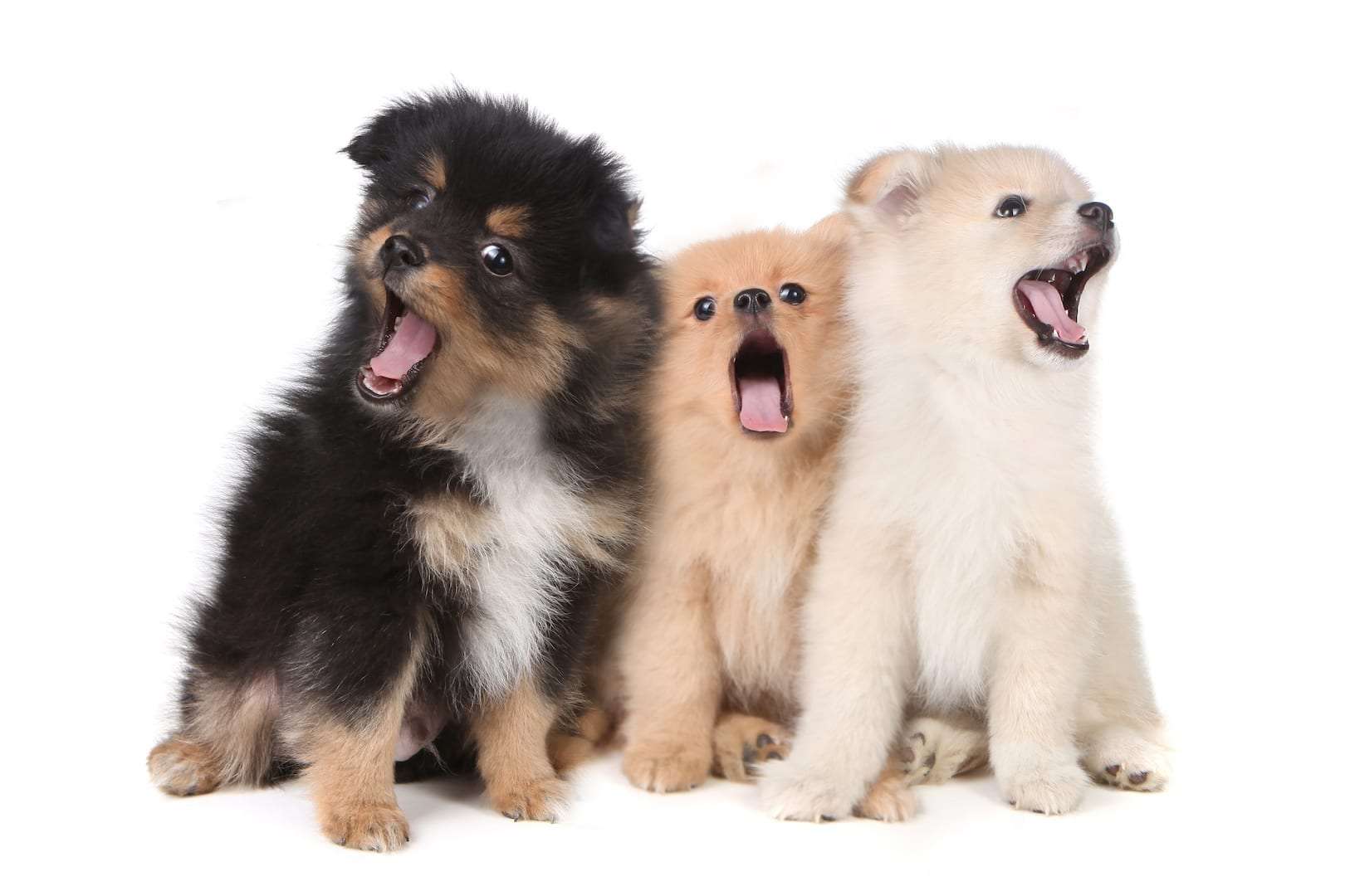 why do dogs howl to music | Dr Marty