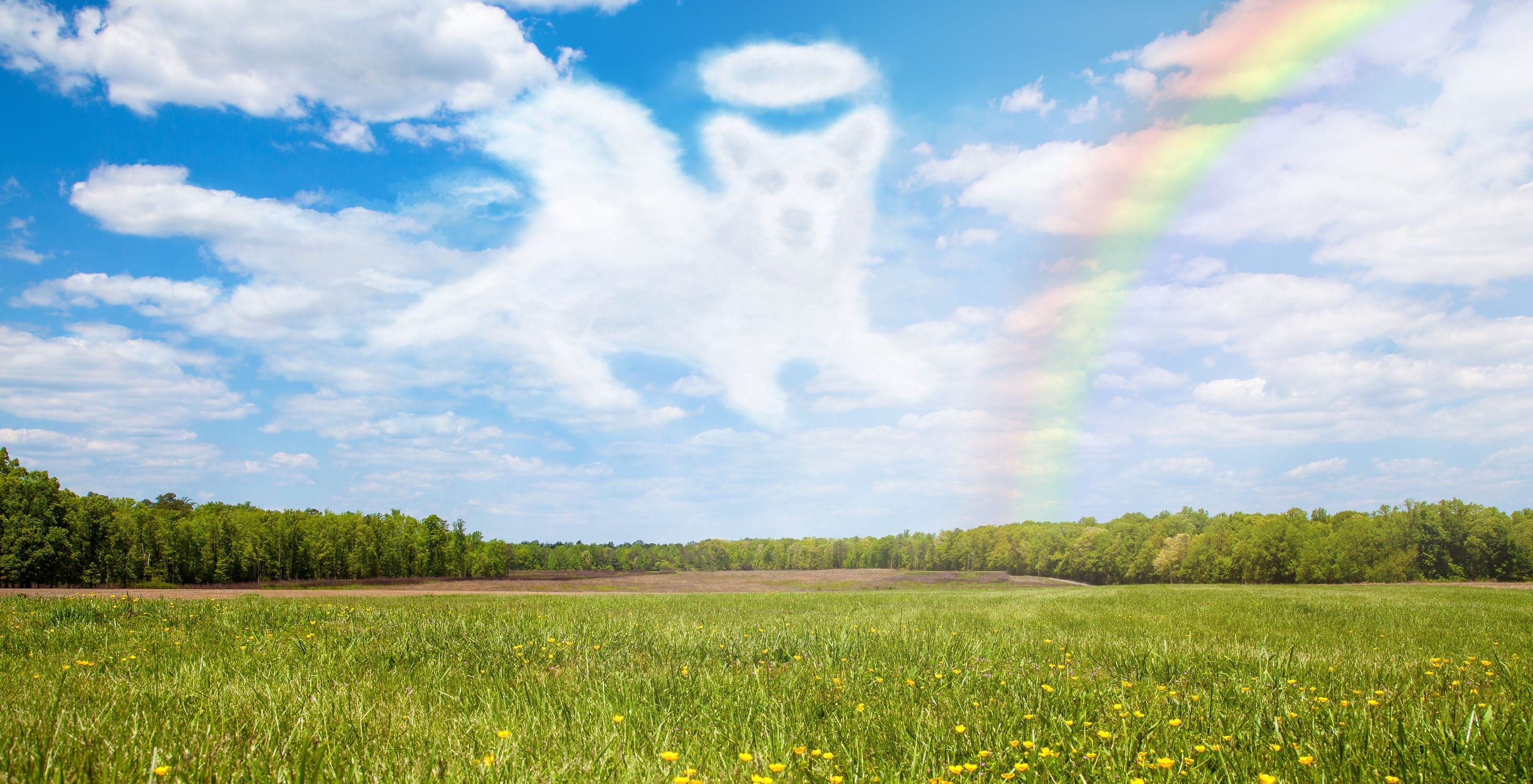 Rainbow Bridge Poem and Dealing With the Loss of a Pet