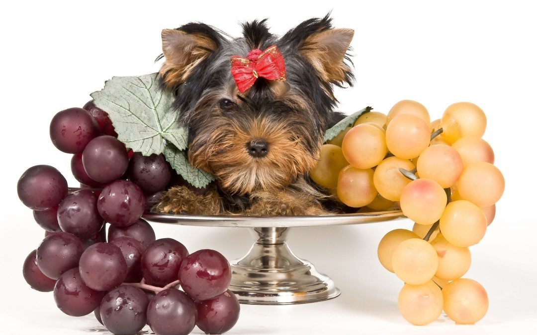 Human Food For Dogs Can Dogs Eat Grapes A Must Read