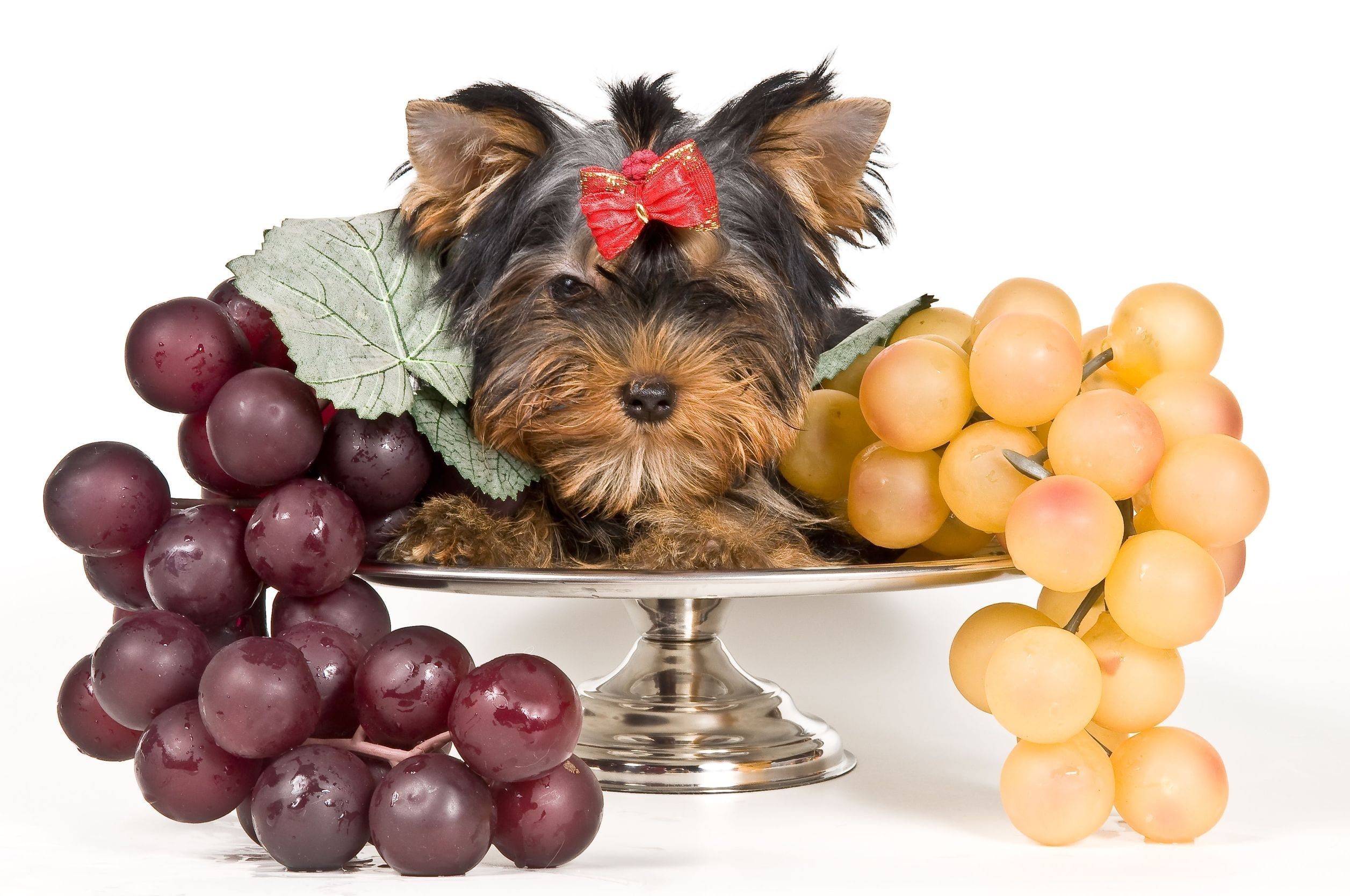 Human Food For Dogs: Can Dogs Eat Grapes?