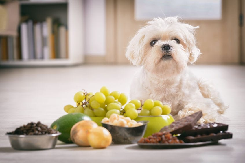 Can Dogs Eat Grapes | Dr Marty