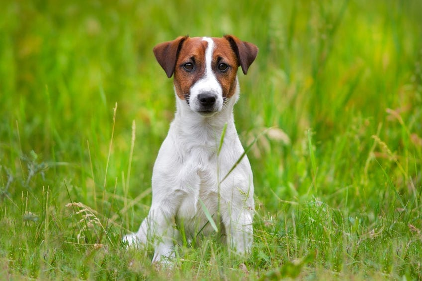 Dogs Eat Grass | Dr Marty