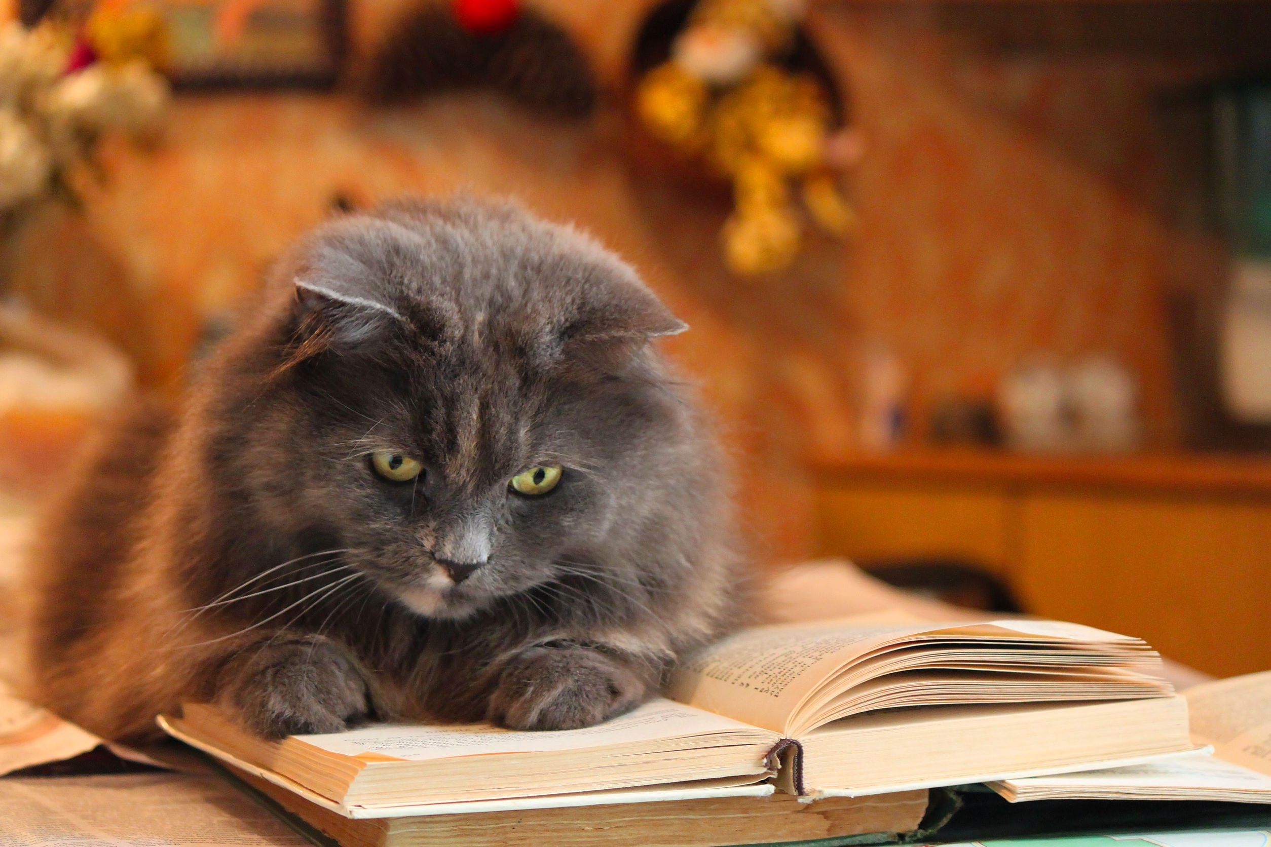 How to Make Your Cat Smarter