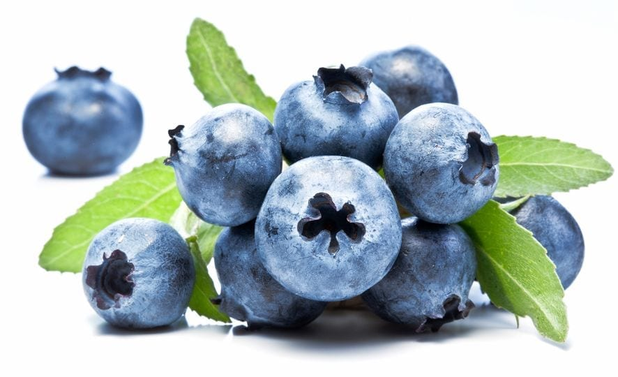 Can Dogs Eat Blueberries | Dr Marty
