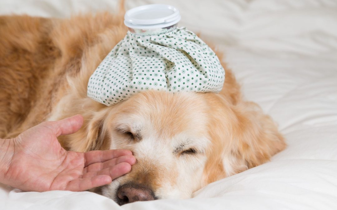 What to Do When the Dog Flu Hits
