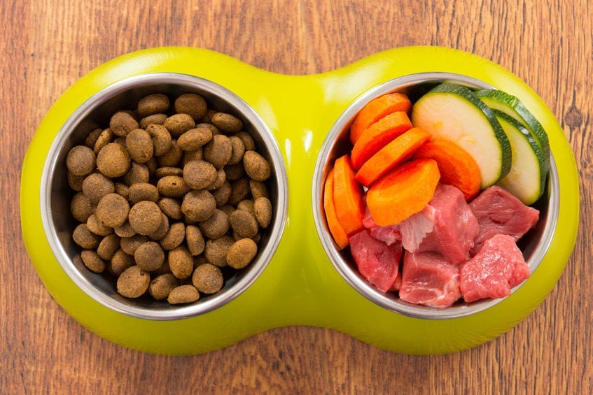 DIY Dog Food | Dr Marty