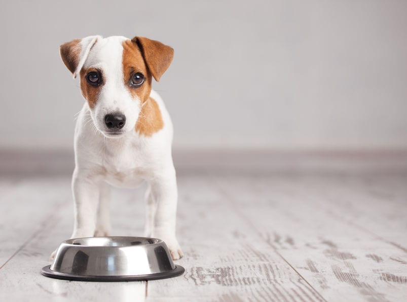 No More Bland Meals: DIY Dog Food Recipes