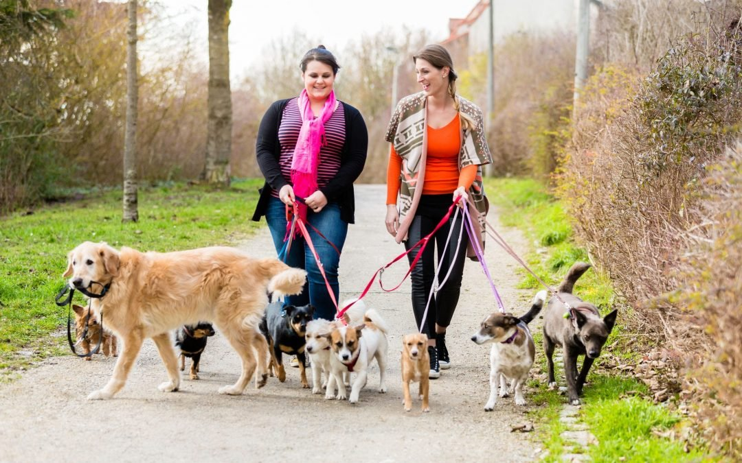 Jobs With Dogs: Skills And Salaries
