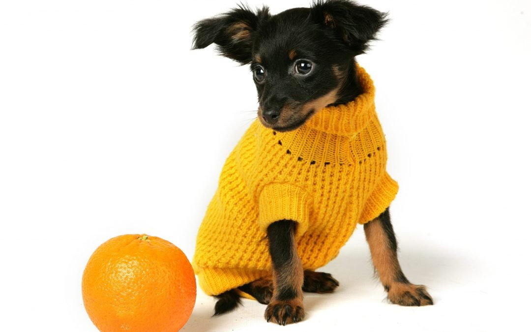 Human Food For Dogs: Can Dogs Eat Oranges?