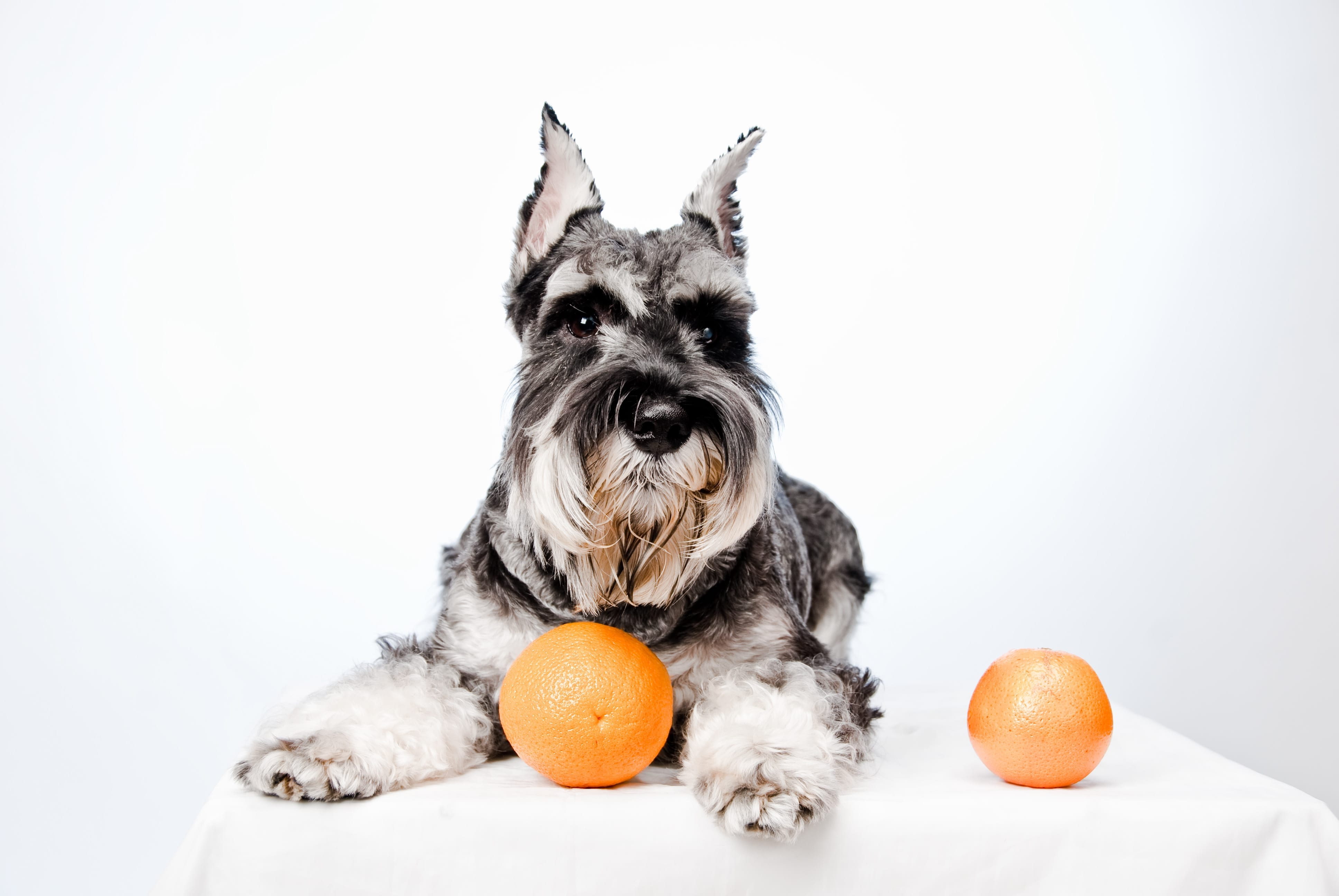 Can Dogs Eat Oranges | Dr Marty
